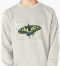 Swallowtail butterfly Pullover