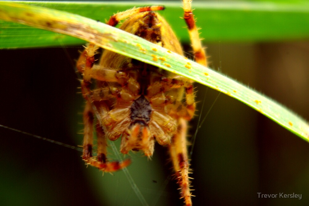 Come into my Web by Trevor Kersley