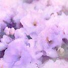 Fleur III by Didi Bingham