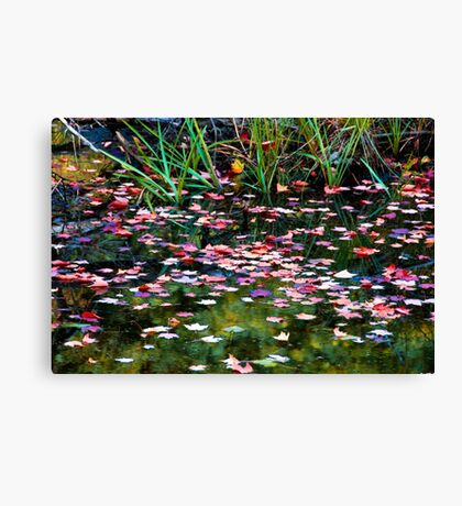 Floating Leaves on a Fall Day Canvas Print