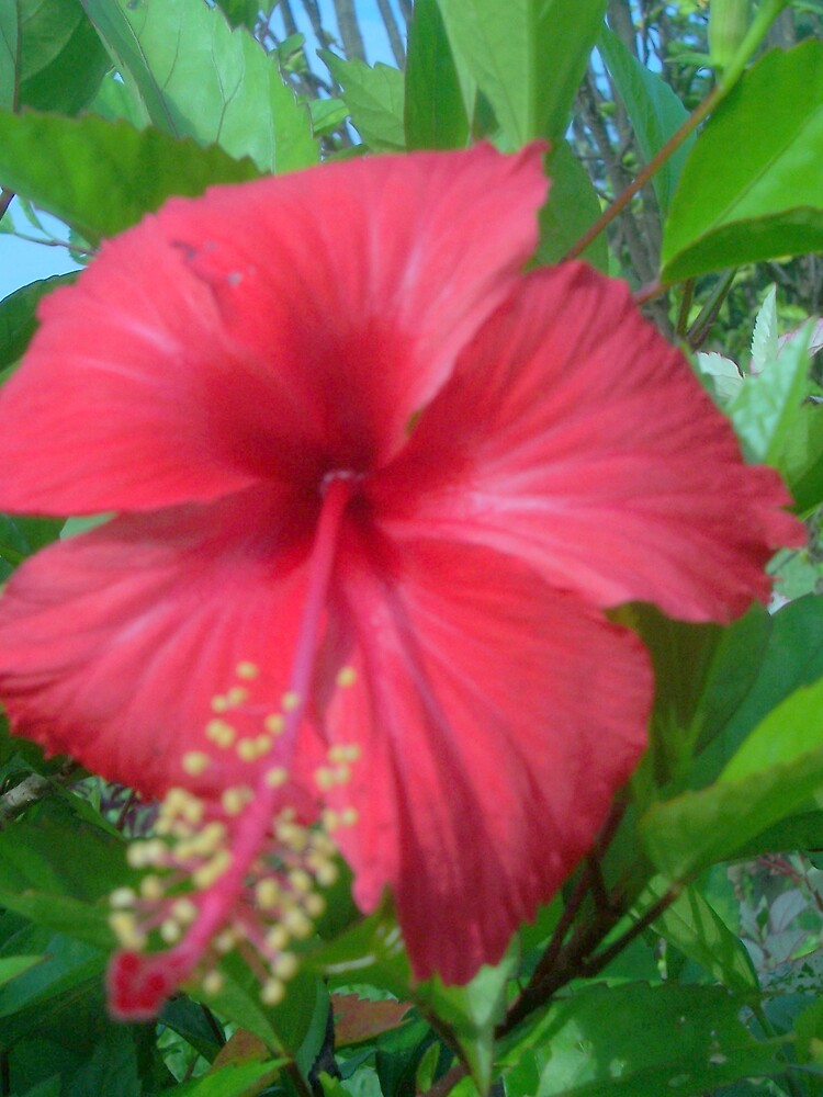 Philosophy of flower teaches   others  to be cheerful by sibananda