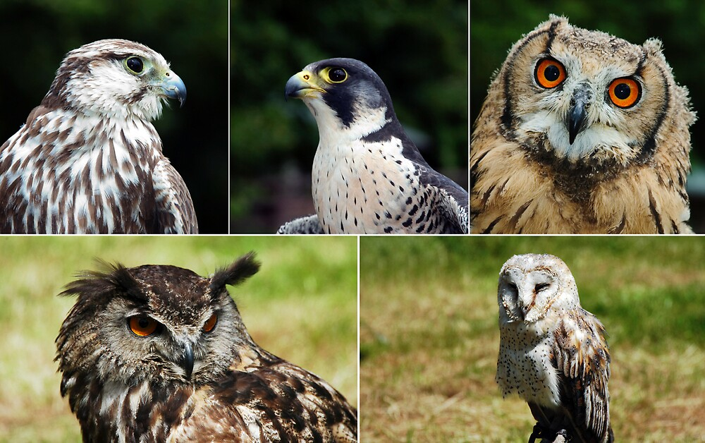 Birds of Prey by ragman