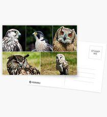 Birds of Prey Postcards