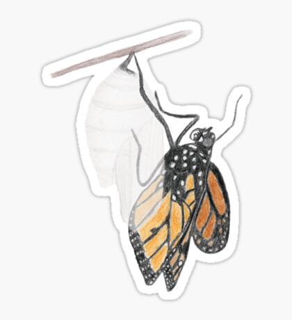 Monarch Butterfly emerging from its Chrysalis Glossy Sticker