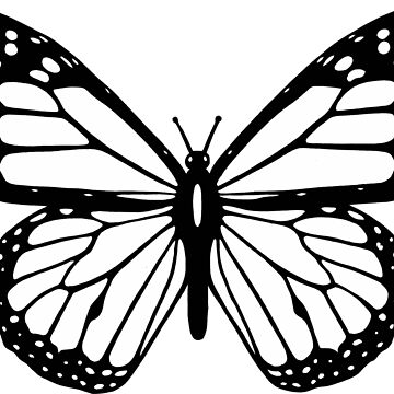 Black and white butterfly. by Claudiocmb