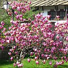 Magnolia tree by Newstyle