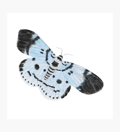 Blue Tiger Moth Photographic Print
