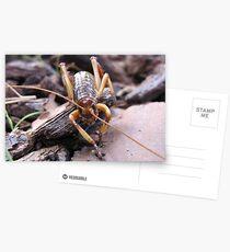 Tree Weta Postcards