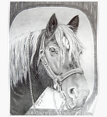 French Percheron Draft Horse Work Poster