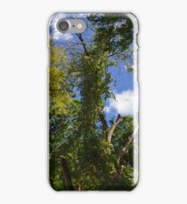 Green Trees and Blue Sky iPhone Case/Skin