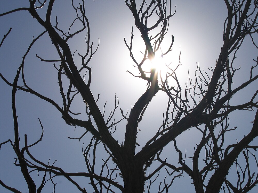 Arches - Sun and Tree by Luke Brannon