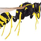 Paper Wasp by Linda Ursin