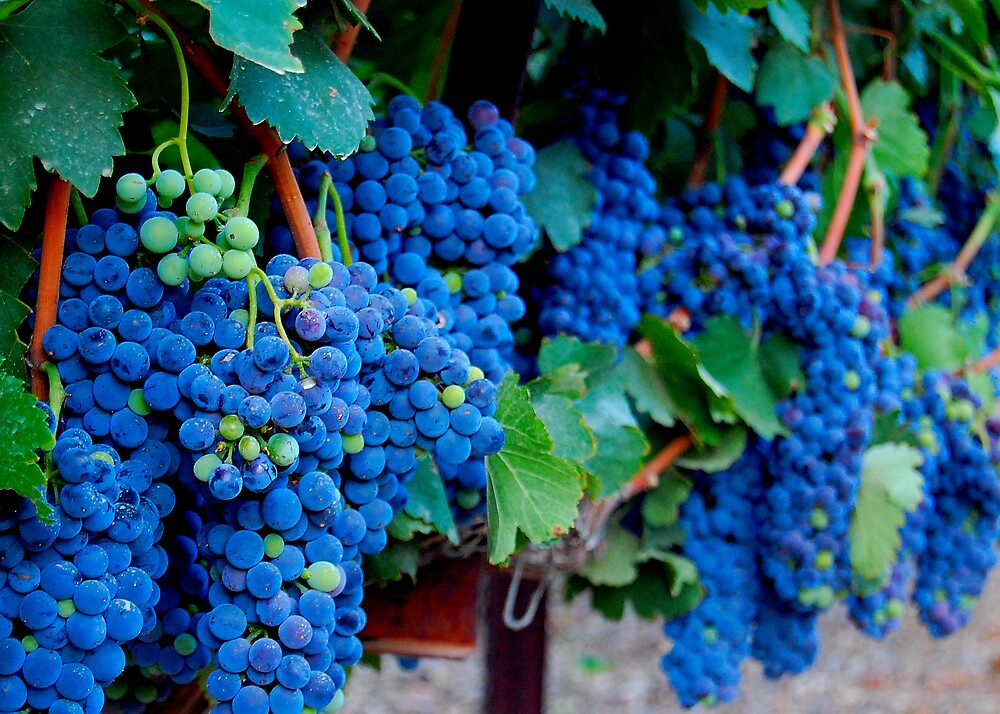 Grapes by Cynde143
