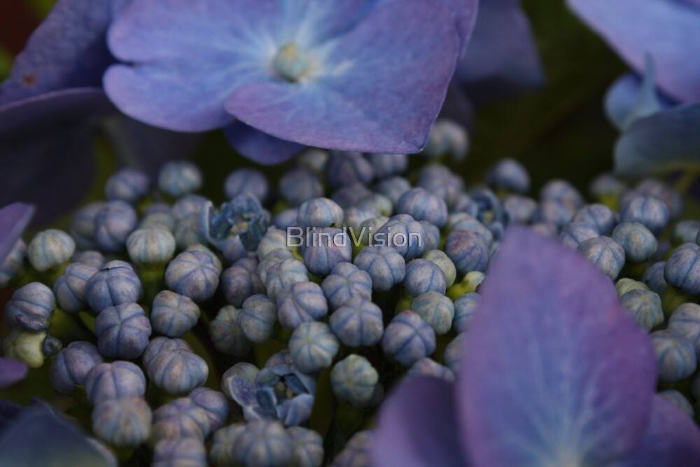 Blues by BlindVision