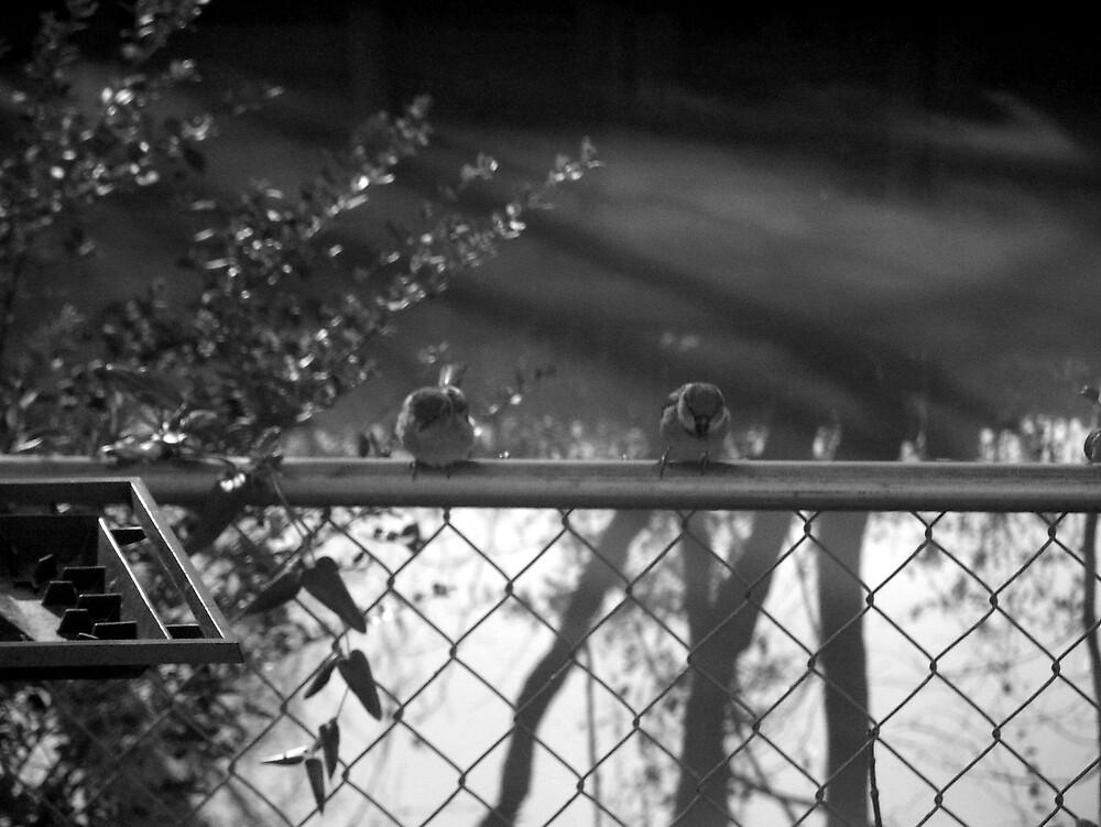 Birds by Heatherleigh23