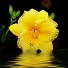 Yellow Silk by Glenna Walker