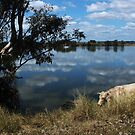 Down by the river by myraj
