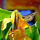 Colors of Summer by jwawrzyniak