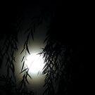 Moon Through the Trees by jwawrzyniak