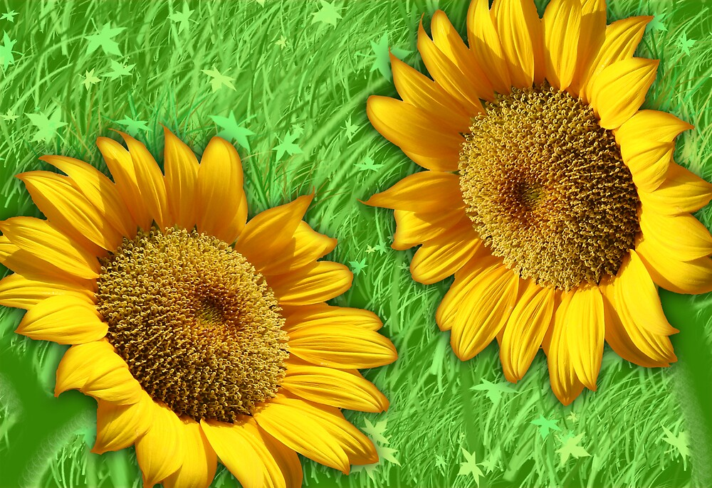 Sunflowers in the grass by Tiffany  Trammell