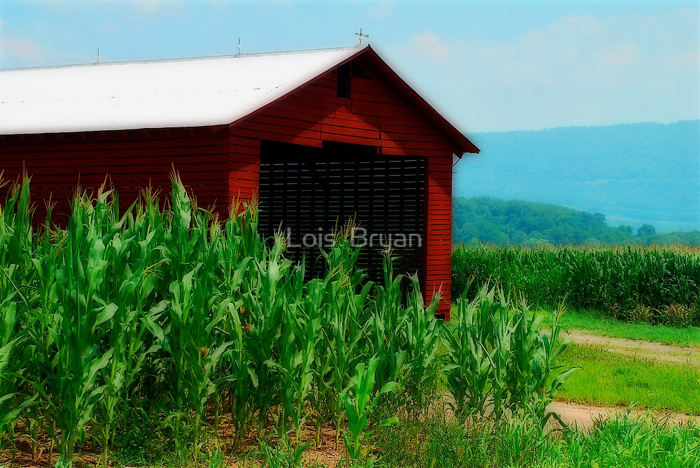 August's Abundance  by Lois  Bryan