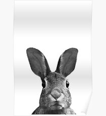 Hase Poster