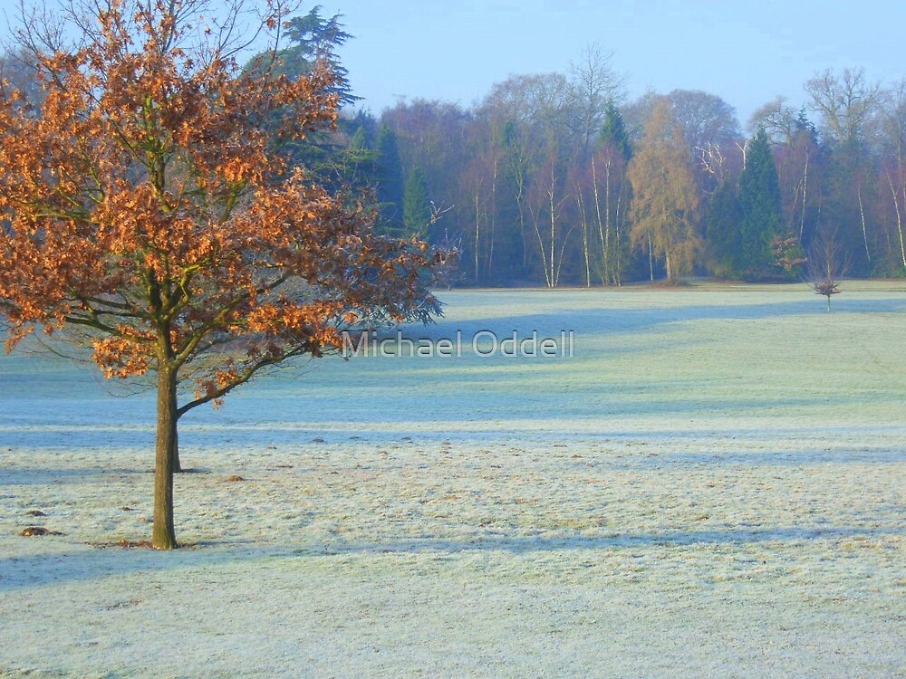 Frosty Morning by Michael Oddell