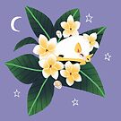 Familiar - Honduran White Bat by straungewunder