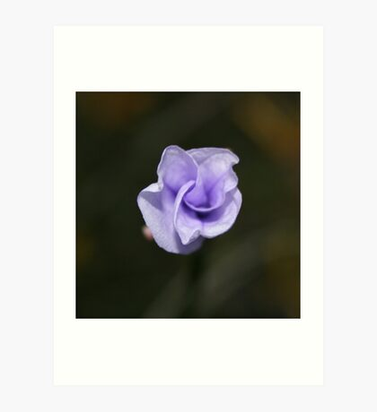 Wildflower Season 4a Art Print