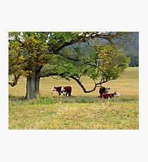 Delegate River Farm Photographic Print
