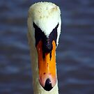 Face of the Swan by Trevor Kersley