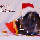 Merry Christmas from Priscilla by Deborah McGrath