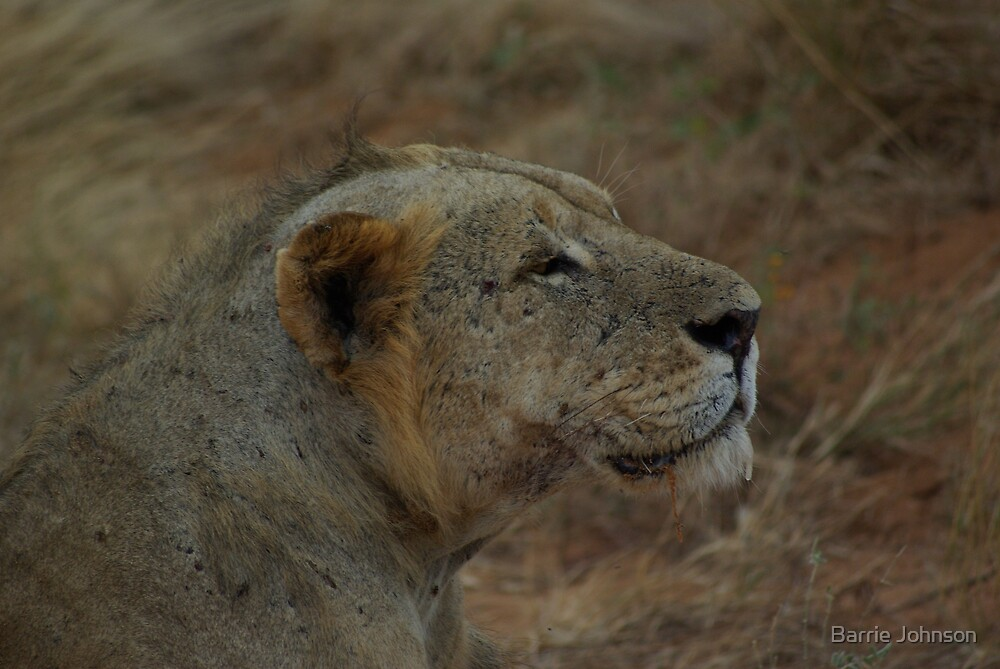 Lion's Drool by Barrie Johnson
