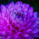 Purple Flower All Aglow by Gerda Grice