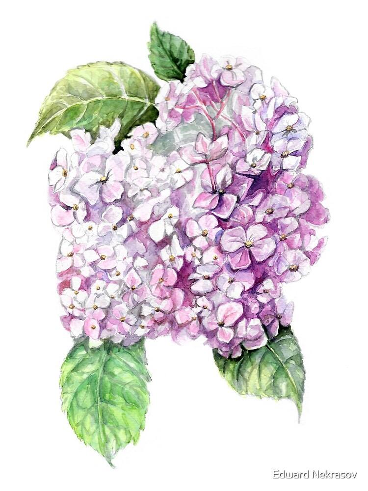 Hydrangea  by Sadykova