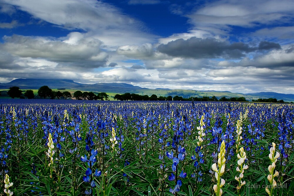Ben Wyvis blue by colin campbell