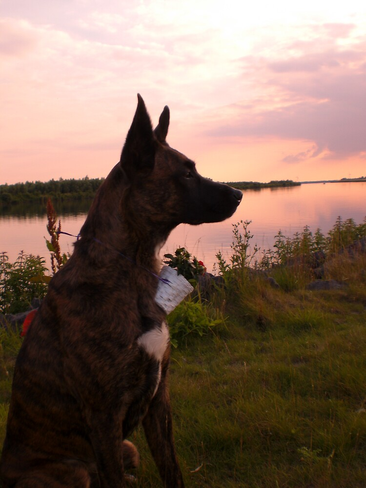 dogevening1 by boap