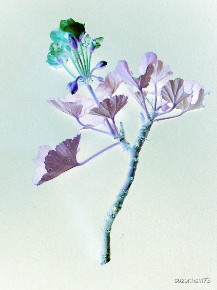 Pastel Geranium by suzannem73