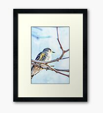 Watercolor Painting; The Female Yellow-rumped Warbler Perching on the Tree Framed Print