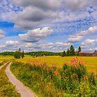 August countryside 7 by Veikko  Suikkanen