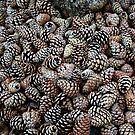 Fir Cones Waiting for Christmas by AnnDixon