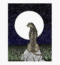 Cheetah Moon II Photographic Print