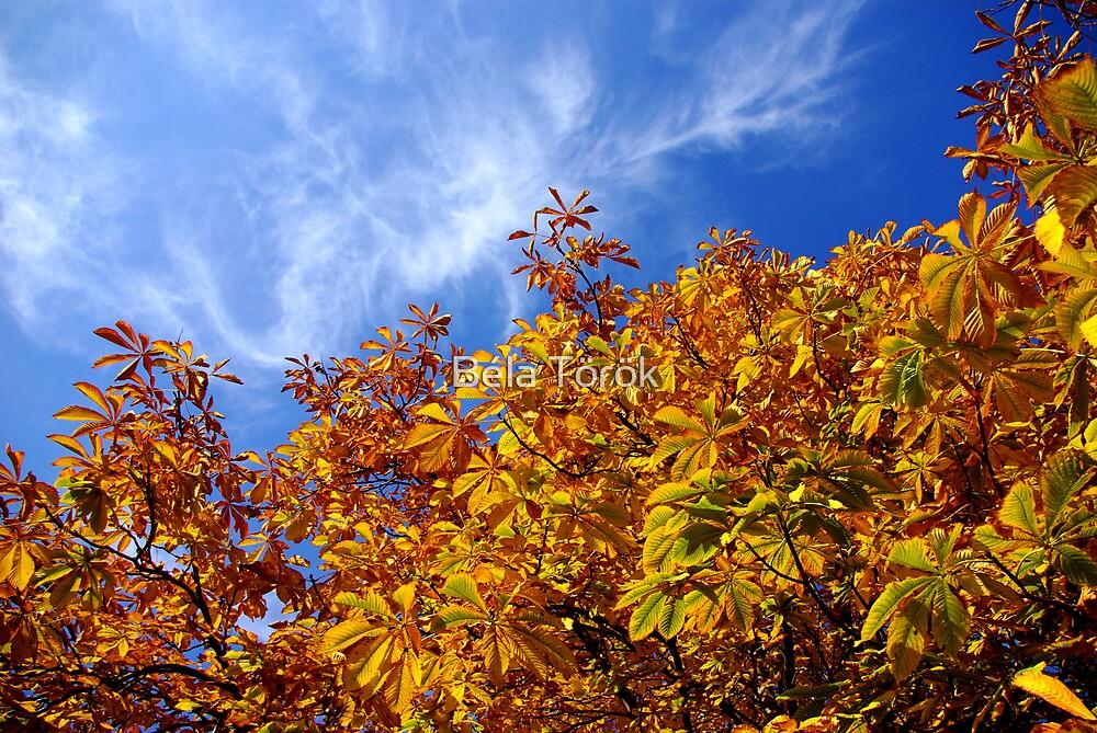 Autumn colors by Béla Török