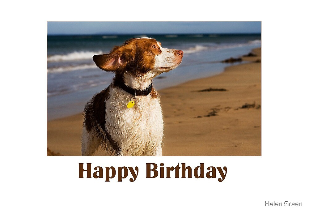 Birthday Card No 8 by Dog Shop