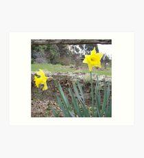 split rail fence and sweet daffodils Art Print