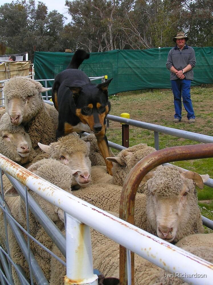 Home on the Sheep's Backs by Jan Richardson
