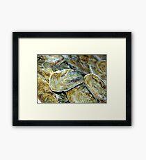 Oyster Shells Framed Print