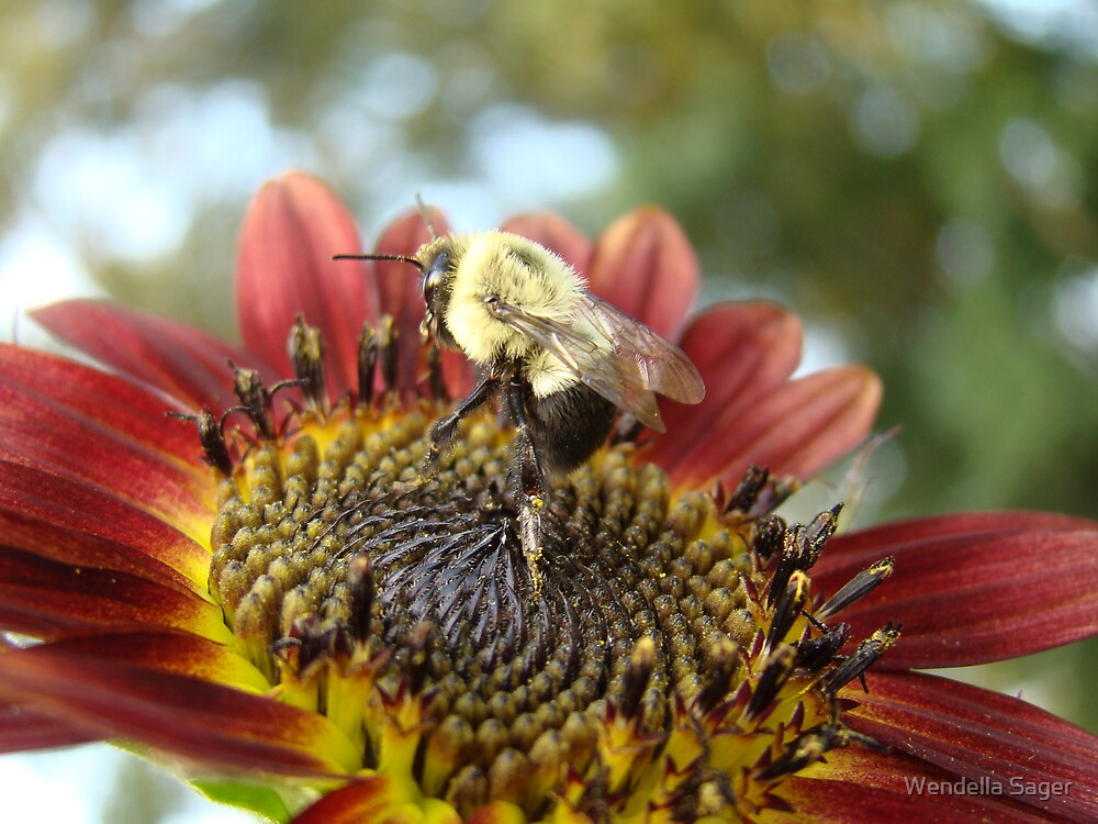 Busy Bee by Wendella Sager