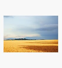 Cornfields in Somerset Photographic Print