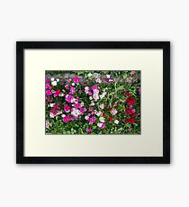 Natural background with pink flowers Framed Print